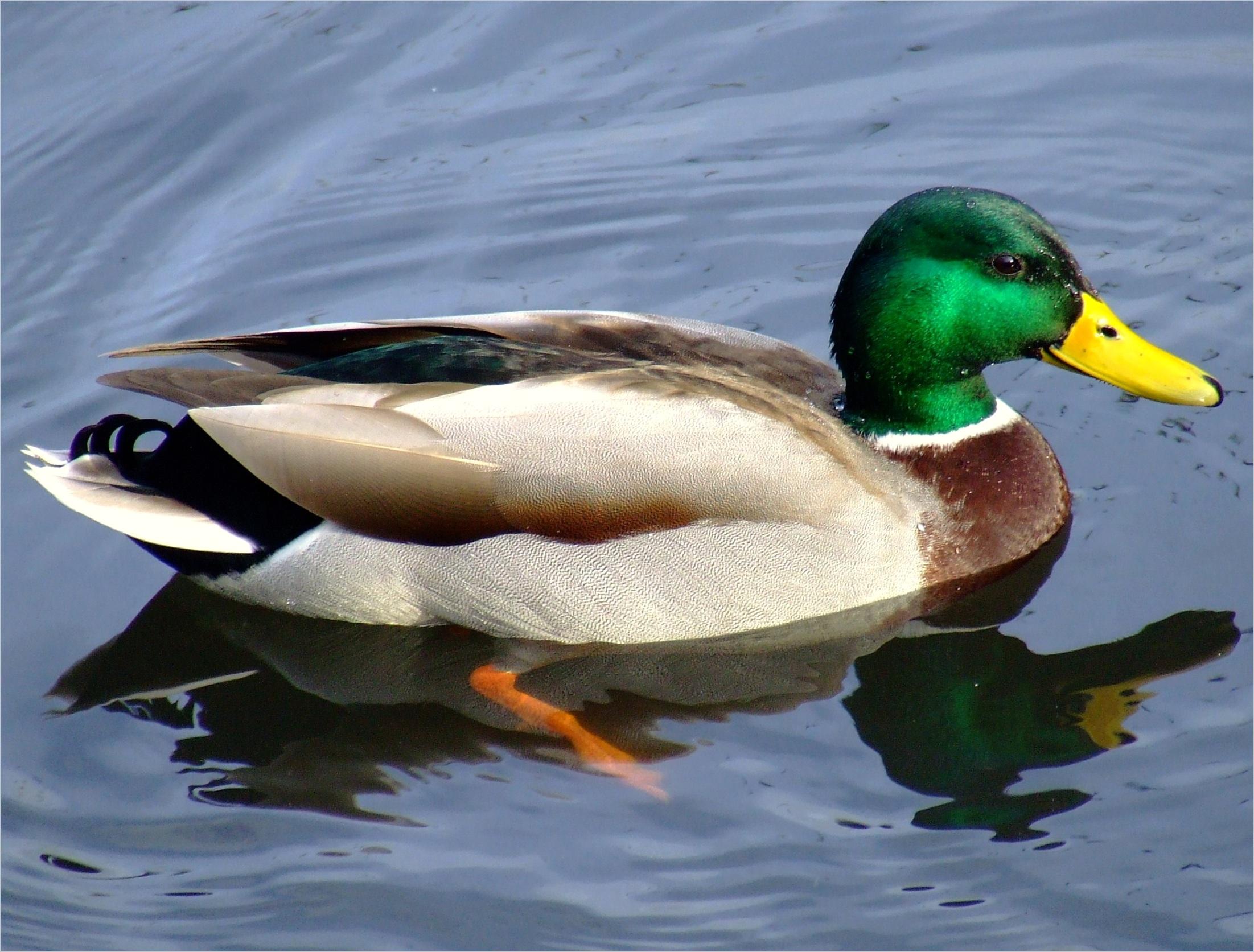 Duck test