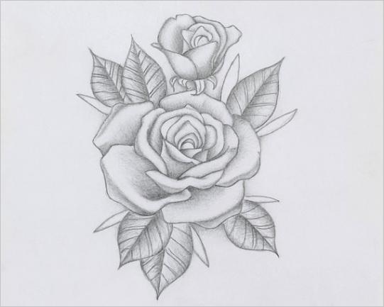 delicate pencil rose romantic rose