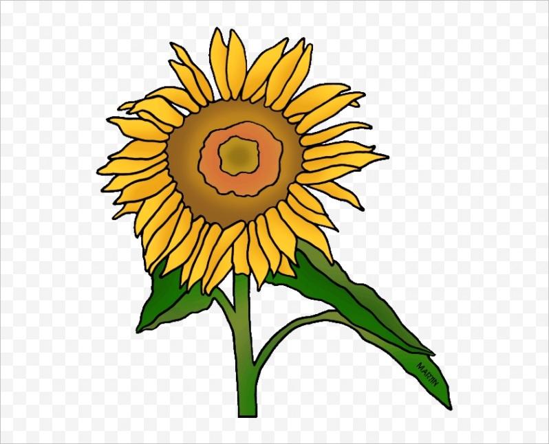 m2i8K9G6d3K9d3i8 state flower of kansas sunflower