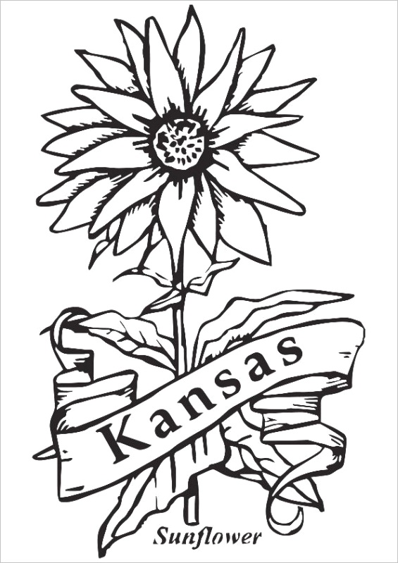 state flower of kansas pictures