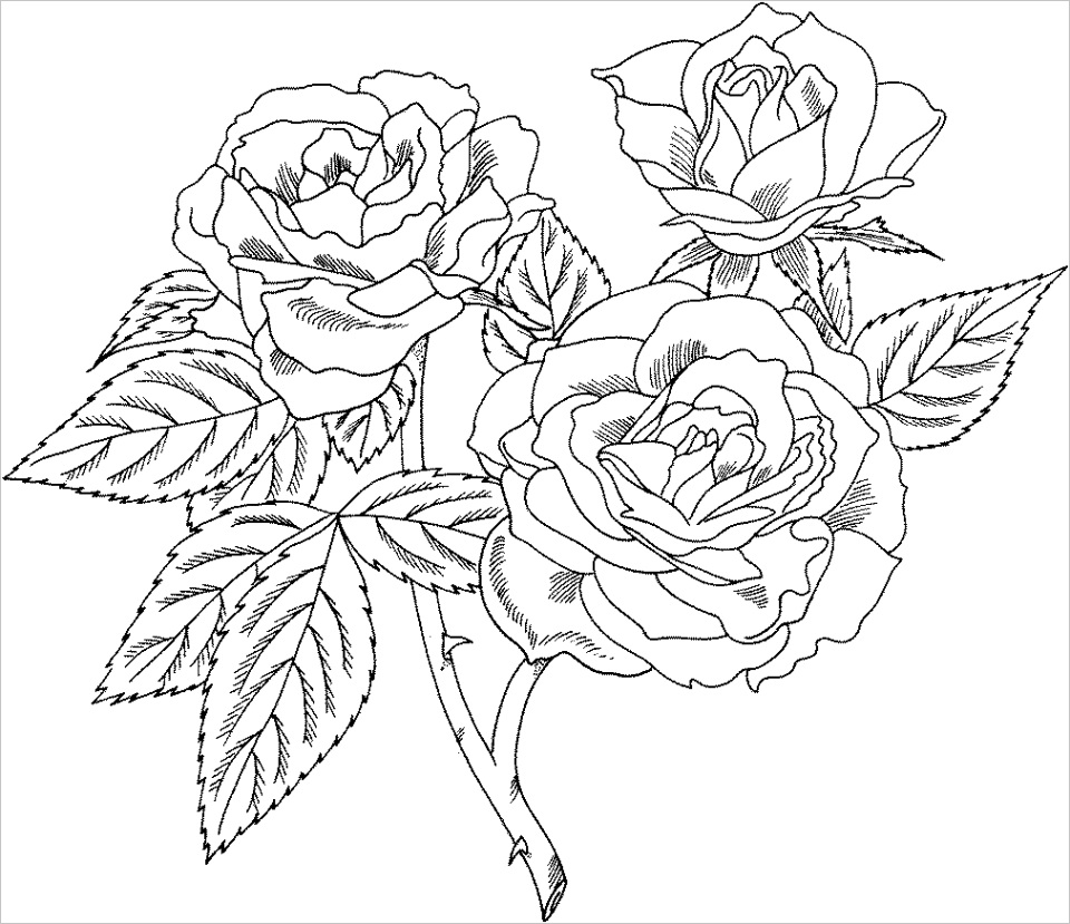 realistic rose coloring pages printableml