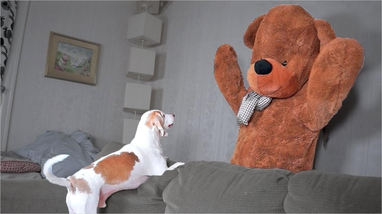 addoux iid= funny teddys&cid=78