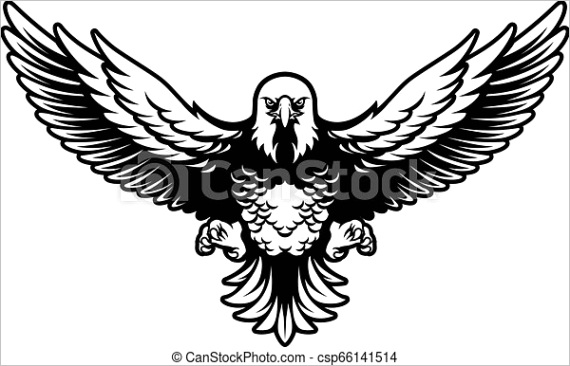 american bald eagle with open wings and ml