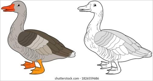 goose clipart image type=illustration