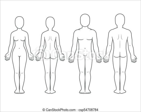 male and female body front and back ml
