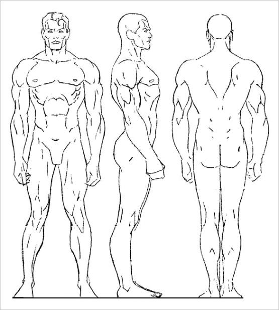 sample human body outline