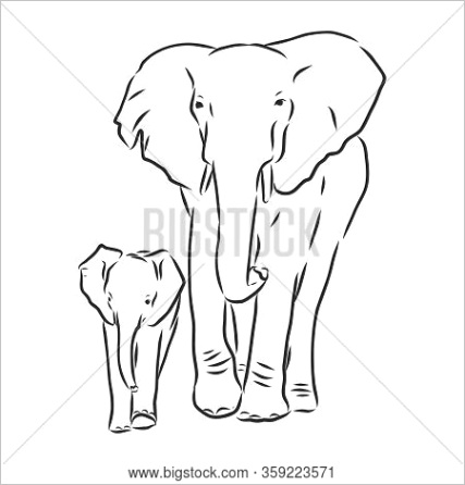 stock vector baby elephant in outline style isolated on white background, vector illustration