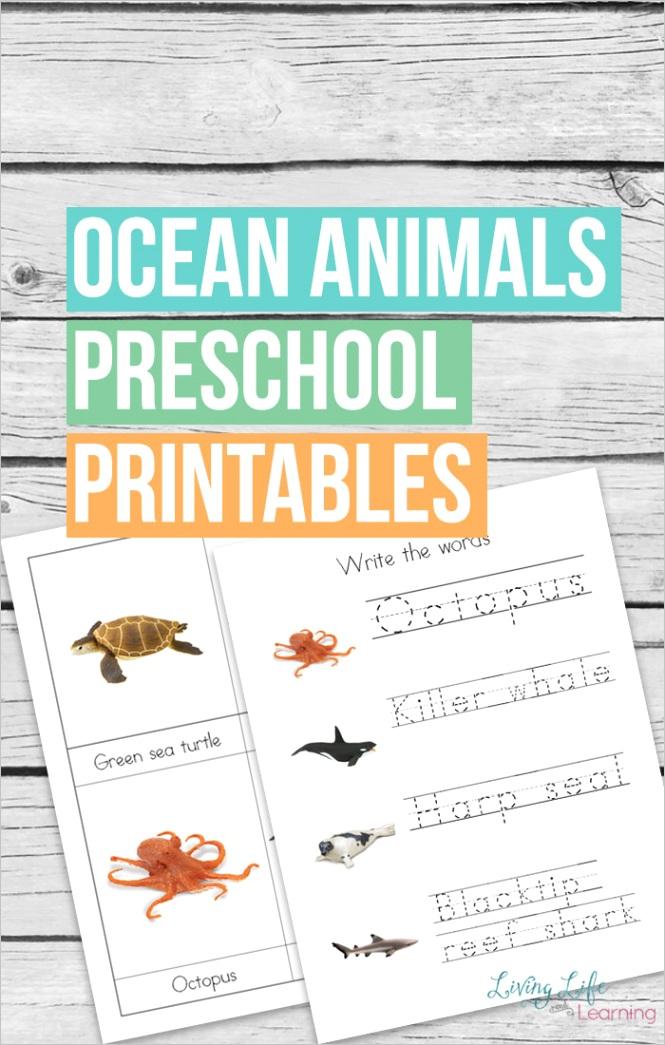 safari ltd ocean animals preschool printablesml