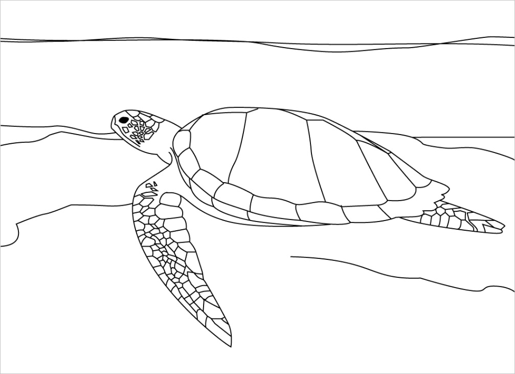 sea turtle coloring pagesml