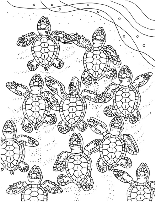baby sea turtles coloring page
