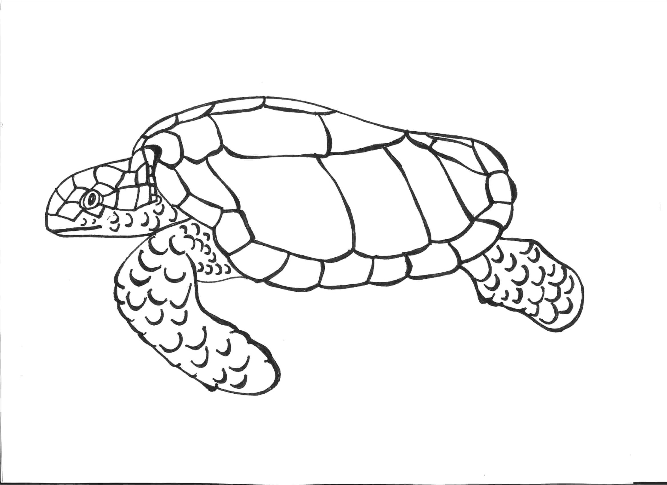 turtle coloring pagesml