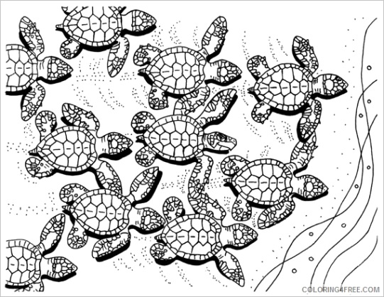 sea turtle hatchlings coloring pages coloring4free