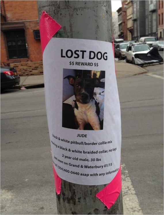 lost dog making flyer tips dos and donts