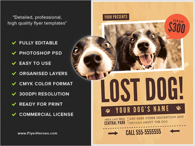 lost dog 1